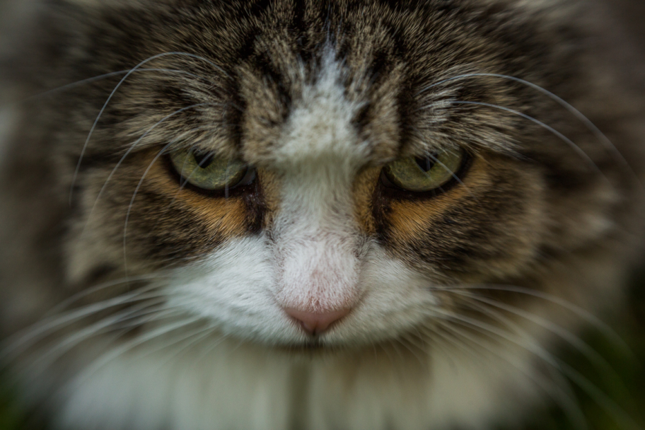 why so serious?: Emotional feline portrait