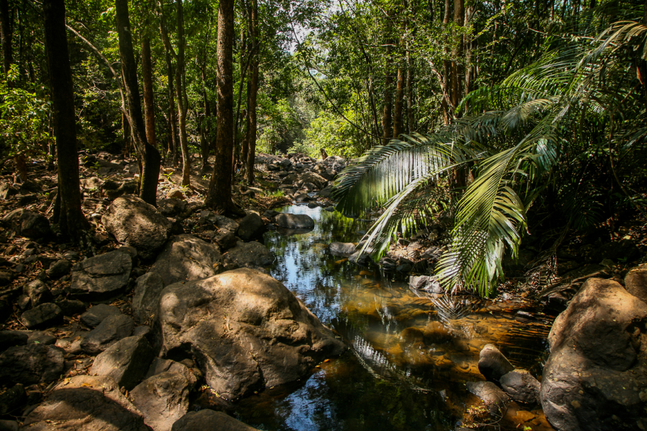 Goan jungle: Goan jungle near Dudhsagar falls, Goa, India